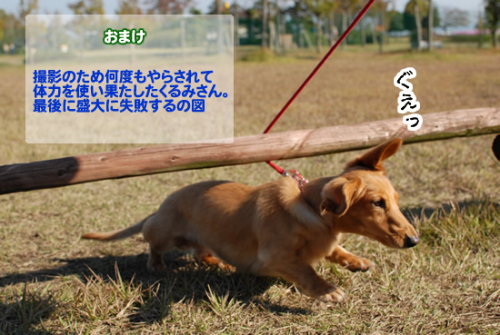 DSC_8161.jpg