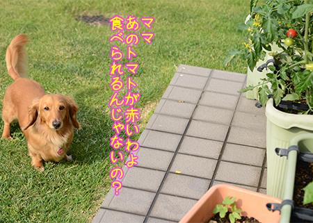 画像3.jpg